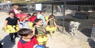 Çocukların Hayvan Sevgisi Bambaşka