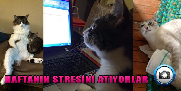 Haftanın Stresini Atan 17 Kedi!