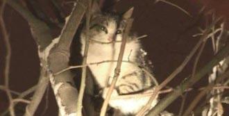 Yavru Kedi Donmaktan Son Anda Kurtarıldı