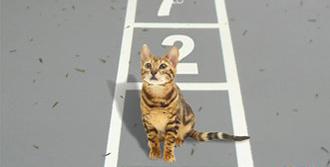 'Kayıp Kedi'