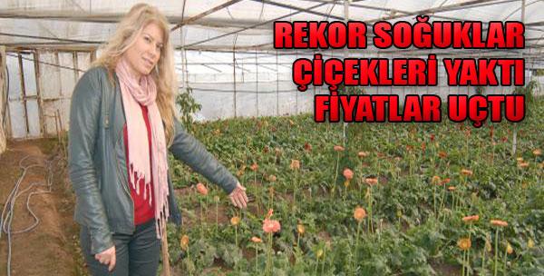 Çiçek Fiyatları Yüzde 50 Arttı