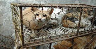Restorana Satılan Kediler Kurtarıldı