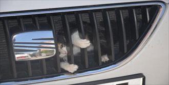 Otomobile Sıkışan Yavru Kedi Kurtarıldı