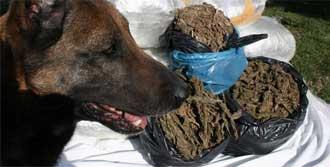 Narkotik Köpeği Şov Yaptı