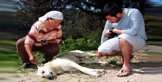 Bodrum'da Zehirlenen Köpek Ve Kediler Telef Oldu