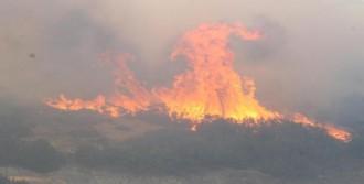 Alevler 12 Hektarı Küle Çevirdi