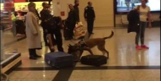 Havalimanında Köpekli Arama