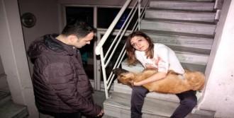 Çarptığı Köpeği Veterinere Götürdü
