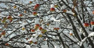 Ardahan'da Kar Yağışı Ulaşımı Aksattı