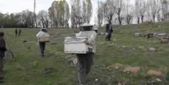 Arıcılar Akdeniz'e Göç Ediyor