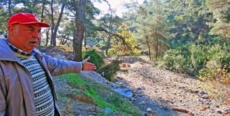 Armutalan'ın Ormanları Çöplüğe Döndü