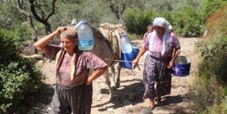 At Ve Eşeklerle Evlerine Su Taşıyorlar
