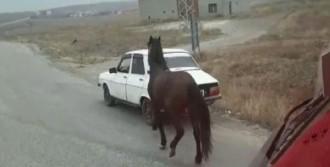 Atı Otomobilinin Arkasına Bağladı