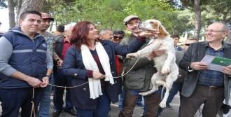 Aydın'da köpek güzellik yarışması