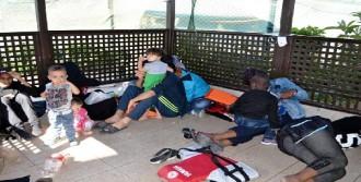 Ayvalık'ta 48 Kaçak Yakalandı