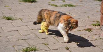 Kediye Protez Bacak Takıldı