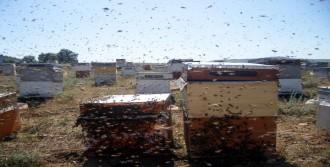 Arıcılar Umutlandı!