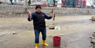 Balık Ölümleri Şaşırttı