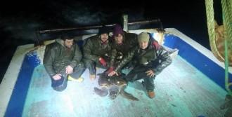 Balıkçıların Ağına Caretta Caretta Takıldı