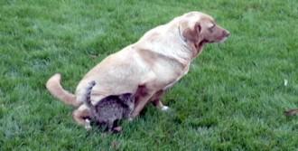 Barınakta Kedi- Köpek Dostluğu