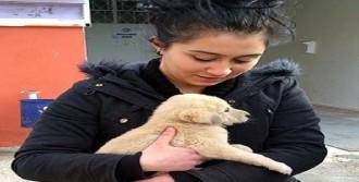 Barınma Evindeki 66 Köpeği Sahiplendiler