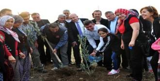 Feyzioğlu, Yırca'da Zeytin Fidanı Dikti