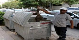 Bebek Cesedi Sanıldı, Kedi Ölüsü Çıktı