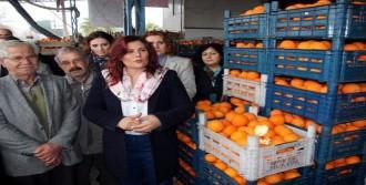 Topuklu Efe Portakal Üreticisini Sevindirdi