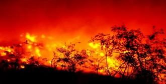 Bodrum'da Tarım Alanları Yandı