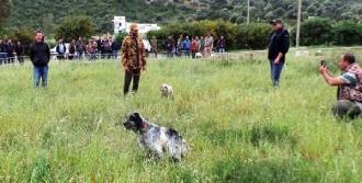 Bodrum'da Av Köpekleri Yarıştı