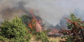 Bolu'da Çam Ağaçları Alev Alev Yandı