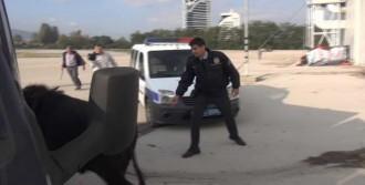 Bursa'da Kurban Operasyonu