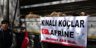 Bursa'dan Mehmetçik'e 80 Koç