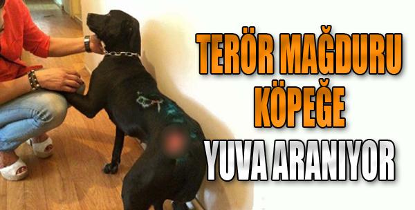 Terör Mağduru Köpeğe Yuva Aranıyor