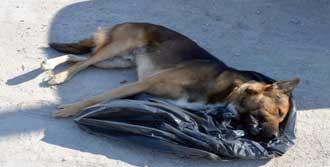 Köpek Katliamı!