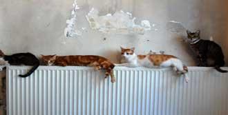 Evde Kedileri  'İstifleyen' Kadın