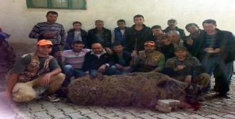 340 Kiloluk Yaban Domuzu Vurdular