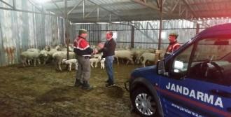 6 Koyun Sahiplerine Teslim Edildi