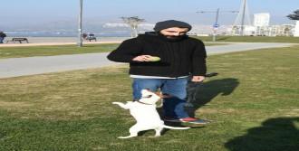 Çılgın Köpek Chivas