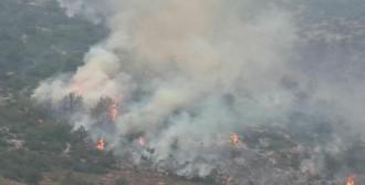 Çöplükte Çıkan Yangın Ormanı Da Yaktı