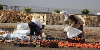 Çöpten Sebze Meyve Topluyorlar
