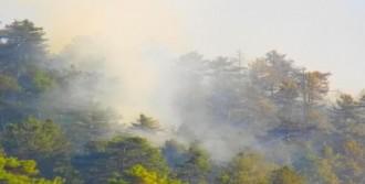 Çam Ormanı Yandı