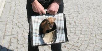 Köpeğini Çantada Gezdirdi