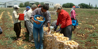 Patates Cenneti Türkiye!