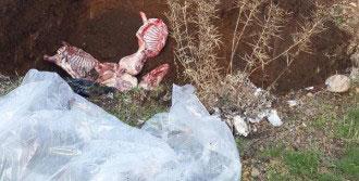 Kamyonette 1 Ton Kaçak Ete Gözaltı