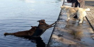 Denize Düşen Köpeği Kıyıya Getirdi
