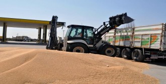 Derik'ten Rojava'ya 200 Ton Buğday