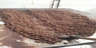 4 Ton Kaçak Et Ele Geçirildi