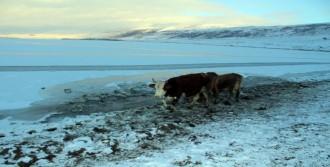 Sibirya Soğukları Göl Ve Dereleri Dondurdu