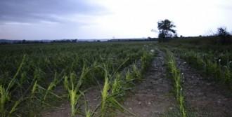 Dolu Yağışı Tarım Alanlarını Etkiledi